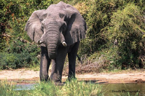 ELEPHANT 2 KNP