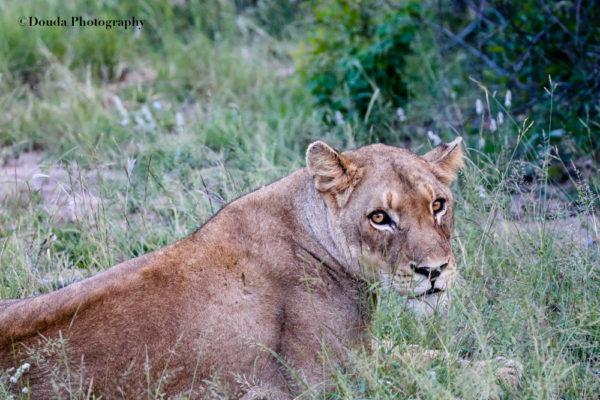LIONNE COLOR