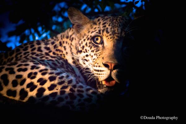 leopard couleur moitie cache