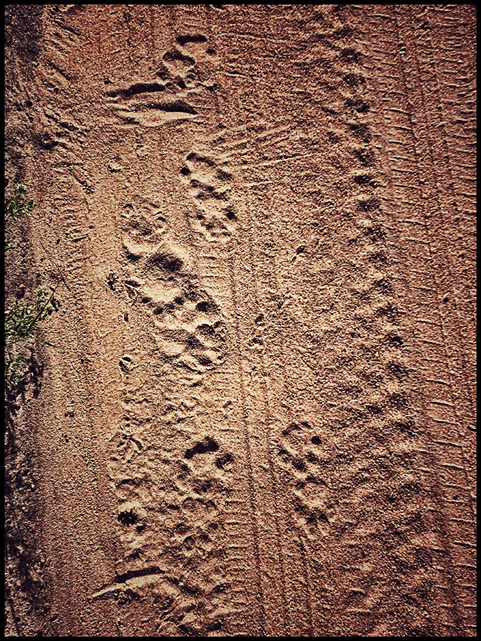 TRACKS BUSH WALK