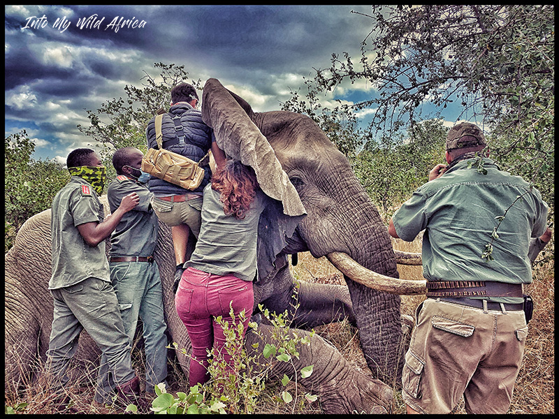 FORTUNATE ELEPHANT CONSERVATION