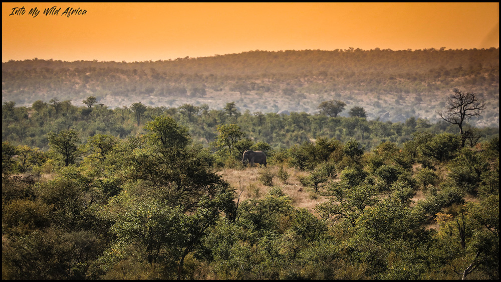 Face to face with a wild elephant in the african bush for a very special mission