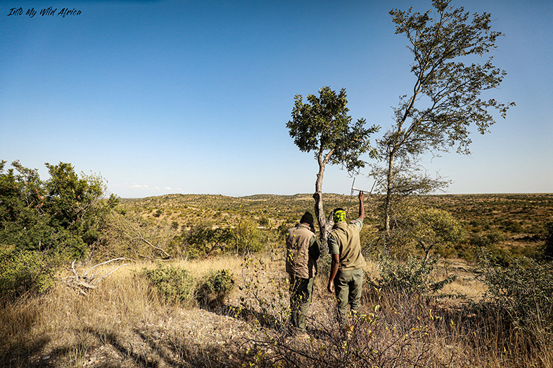 TRACKING ELEPHANT CONSERVATION